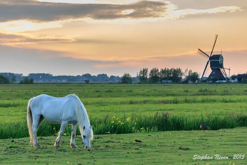 light sunset sky horse sun holland colour mill netherlands windmill landscape eating gray meadow grassland polder grazing landschap krimpenerwaard vlist bonrepas