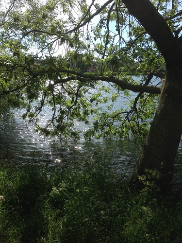 161/365 Summer greenery by the lakes | by Anetq