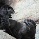 20090420 Aquarium 8 (Fighting)
