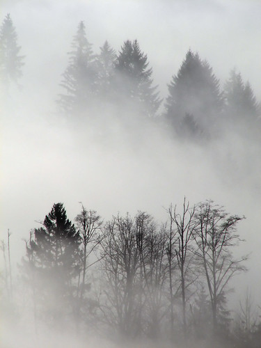 trees cloud mist tree fog forest woodland river washington woods lewis valley wa lewisriver canons3