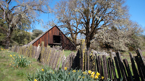 california leica wood flowers trees sunlight flower tree green overgrown oneaday grass sunshine barn fence landscape photo moss spring photoaday lichen 365 decrepit derelict pictureaday willits highway20 project365 dlux3 danielmacdonald dmacphoto danielmacdonaldphotographer dmacphotocom