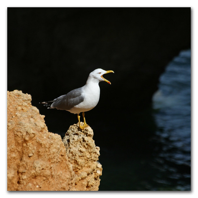 Look out theres a s0ulsurfing about (portugese gull powered early warning system)