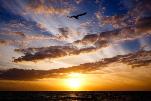 blue sunset sky orange bird beach gulfofmexico water silhouette stpetersburg landscape treasureisland seagull explore sunsetbeach 1022mm 34 mapped