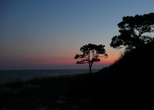 sunset vacation tree fl 2009 alligatorpointflorida