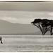 Africa    Heavy loneliness by Jose Antonio Pascoalinho