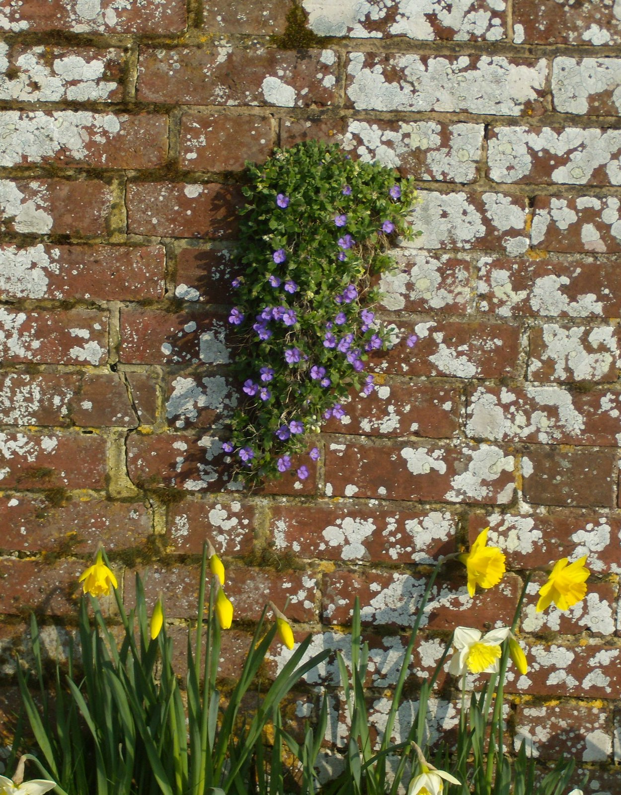 Wall Rye Circular
