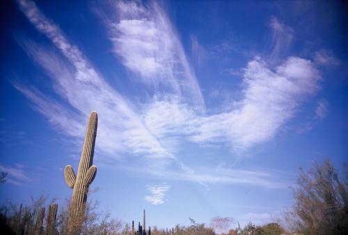 Saguaro sky | by kevin dooley
