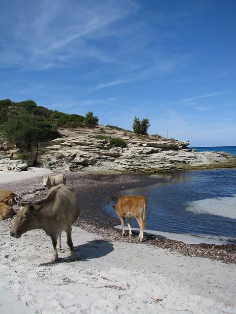 Plage Du Lotu - Corsica - France