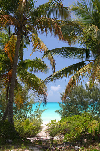 explore newcaledonia beach ouvea nouvellecaledonie coconuttree tropical paradise wild sandybeach forreal travel tourism nature turquoise blue sea