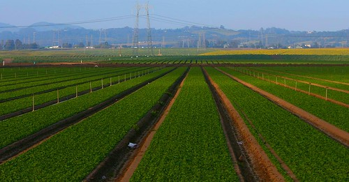 Open Innovation in the Agri-Food Sector