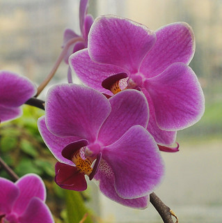 Orchids   by Stephanie Dengel
