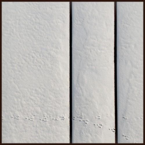 winter snow abstract rabbit photoshop square helsinki nikon tracks 100v10f 2009 pasila d300 palabra 500x500 ok6 ollik 20090227