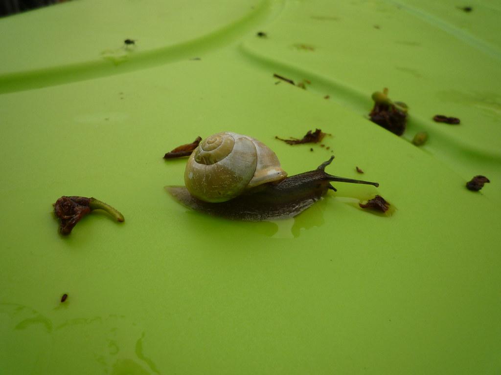 Toto l 39 escargot 1 hollowmac flickr - Toto l escargot ...