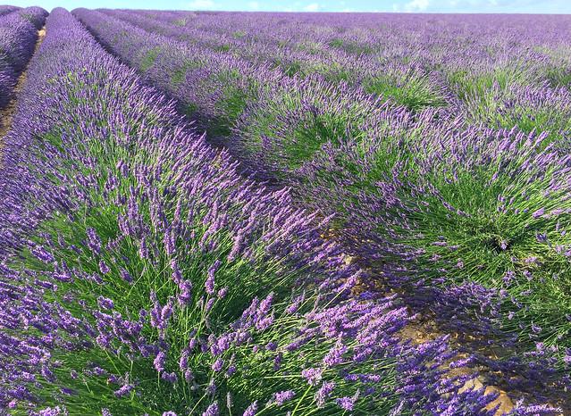 Endless Violet