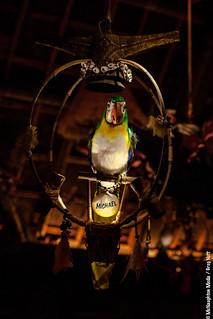 Michael @ Walt Disney's Enchanted Tiki Room