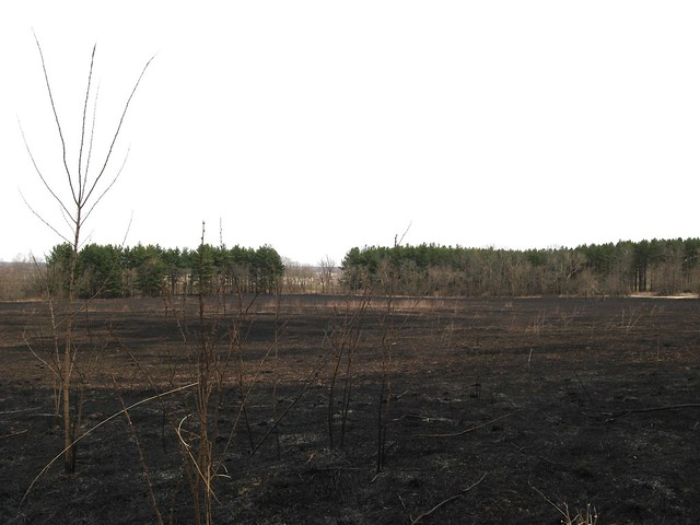 Prescribed Burn Chain O Lakes State Park