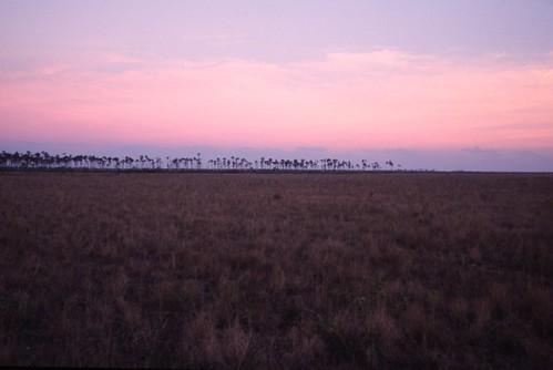 Everglades | by Dominic Sherony