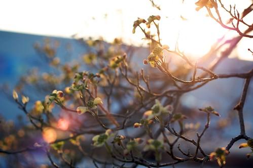 sunset nature georgia evening spring dusk buds palmetto