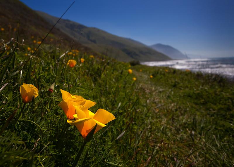 Poppy Trail by AlwaysJanuary (Randy)