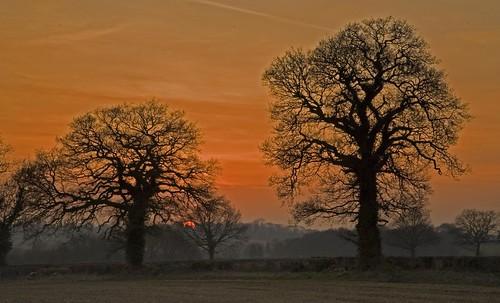 longexposure england art nature digital evening colours natural britain patterns des solstice oaks stillness breathtaking slowexposure herts goul aplusphoto theunforgettablepictures breathtakinggoldaward desimage