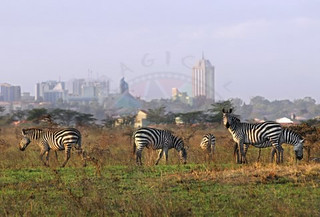 Common Zebra | by Magical Kenya