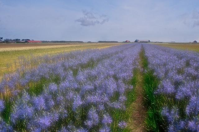 A Blue Walk to the Farm