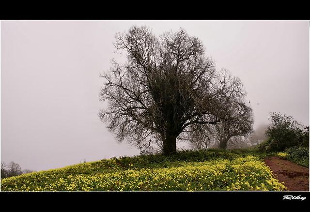Alfombra Amarilla - Yellow Carpet