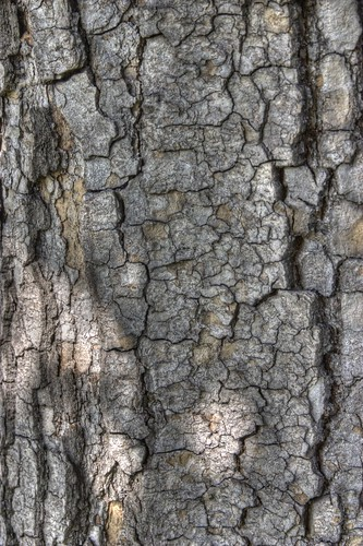 Free HDR Tree Bark Texture 3 | by thousandshipz
