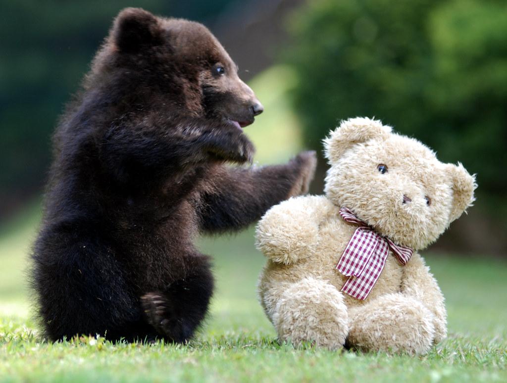 Bear freinds   Bear freinds @ everland korea twitter com/flo…   Flickr