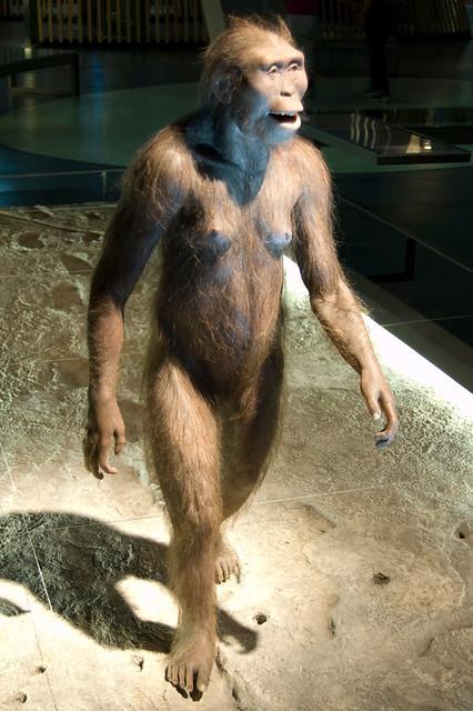 Cosmo Caixa: Australopithecus Afarensis