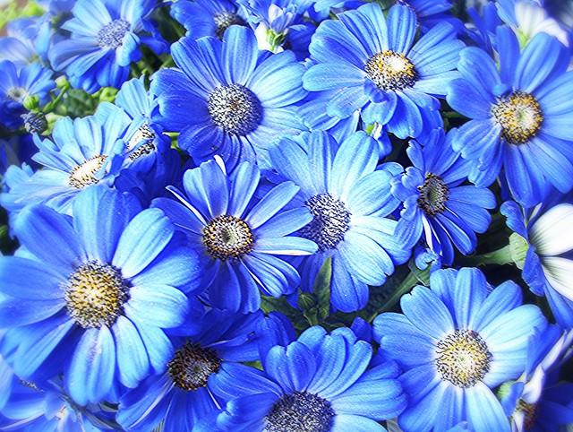 ~01-02-2006 Winter Blooms #4~