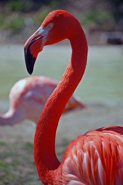 Bright Flamingo