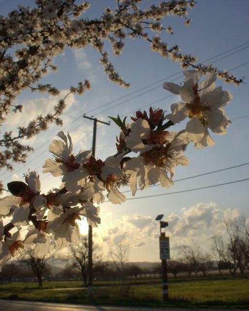 orchard at dusk