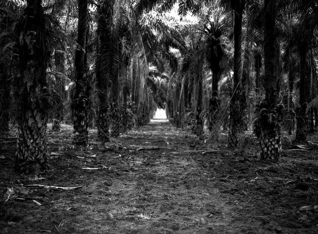 Camino a la Luz