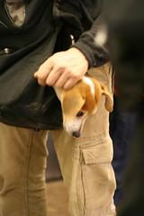 Subway Dog - 03/07/09