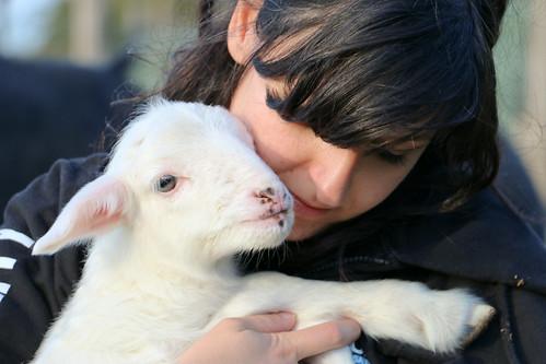07/11/2014 - Roma - Salvataggio dell'agnellino Basilico