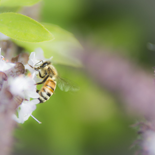 Bee plus | by Timothy M Roberts