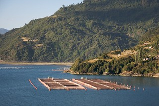Farmed salmon pens 7 | by Sam Beebe