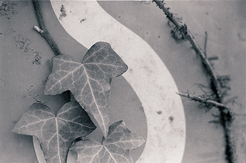 leaves + part of 'S' | by ezwal
