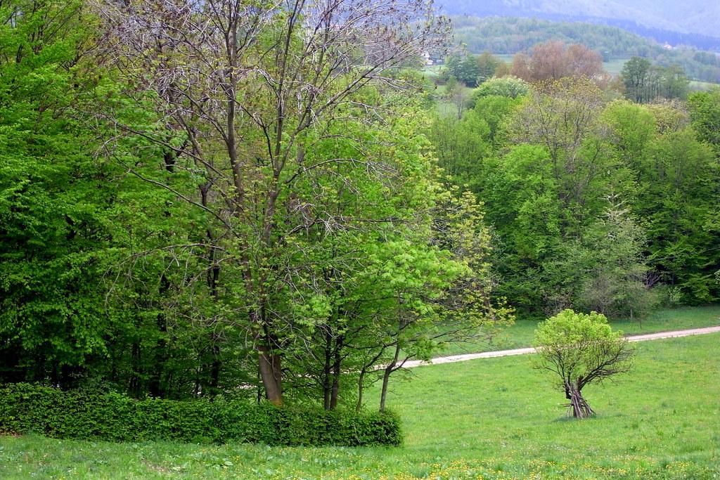 Odcienie zieleni / Shades of green