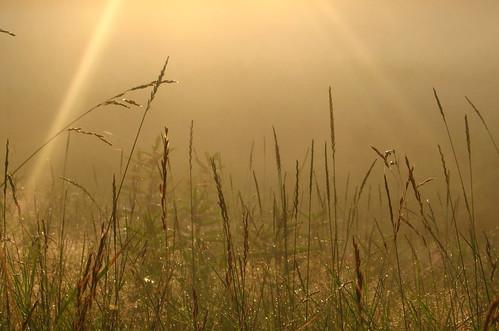 light plants green grass fog sunrise gold maine spiderweb brunswick lensflare hay