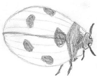 doodle week: ladybugs
