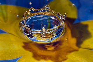 water flower | by spettacolopuro