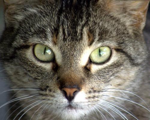 cat mywinners platinumphoto