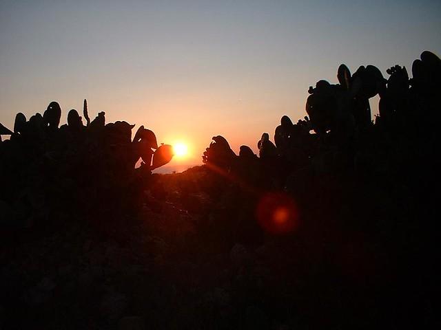Cactus Puglia