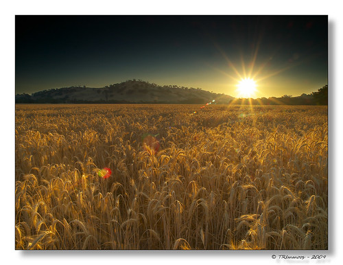 california lighting morning sky sun sunlight sunshine skyline sunrise landscape gold wheat vacaville wide scenic wideangle olympus hills explore lensflare sunburst e3 californialandscape solanocounty zd nd8 ndgrad 1260mm olympuse3