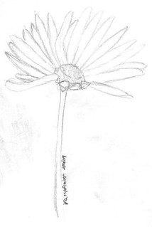 doodle week: daisies
