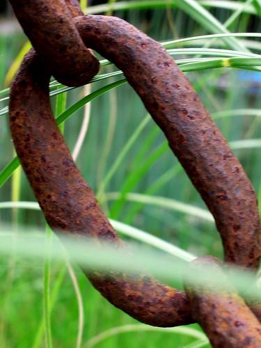 view rusty chain link pampasgrass jaybird gunclub