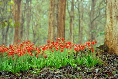 Woods with Garland | by dhruvaraj