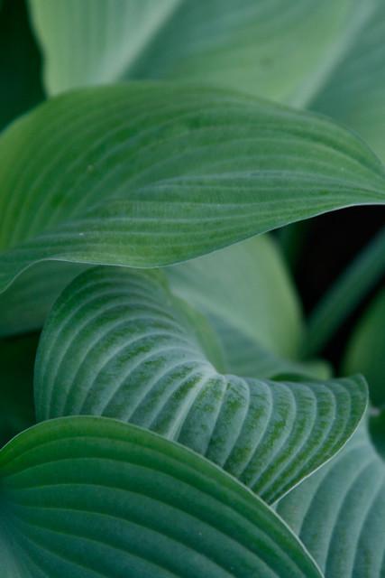 124.365 : Leafy.